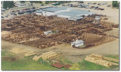 Olds Auction Mart